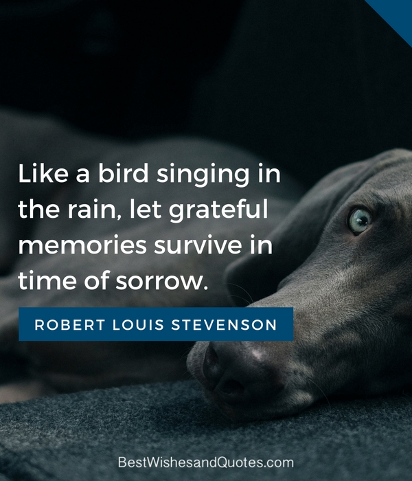 Only True Animal Lovers Will Get These Loss Of A Pet Quotes