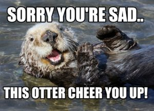 Funny Meme To Cheer Someone Up : These cheer up memes are sure to raise a smile best wishes and