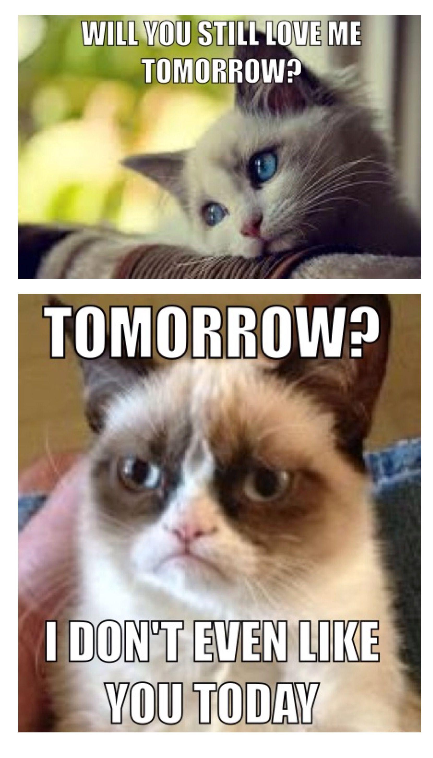 Grumpy Memes