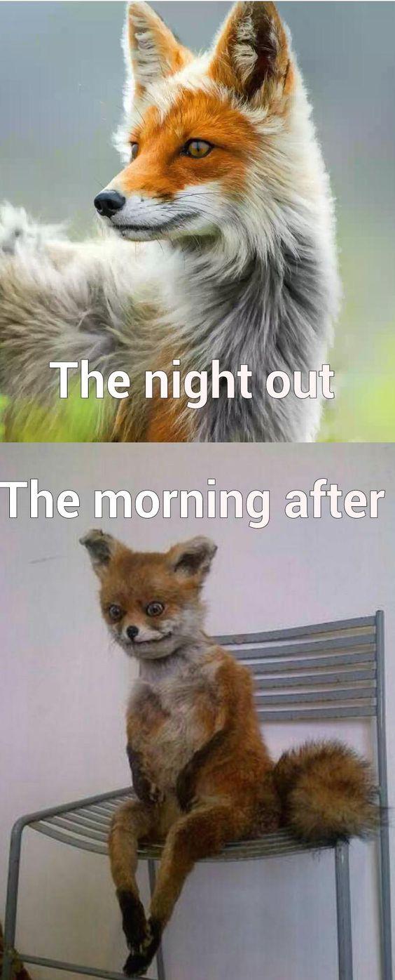Hangover Memes
